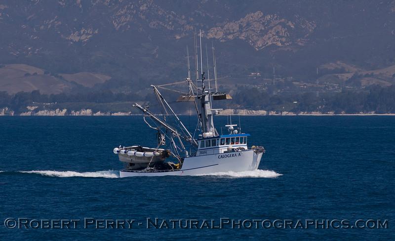 vessel squid seiner Calogera A 2011 07-18 SB Channel - 001