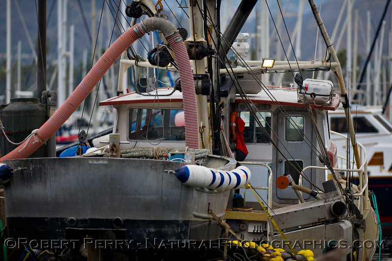 vessels Loligo squid offload 2011 11-11 Ventura Hbr- 001