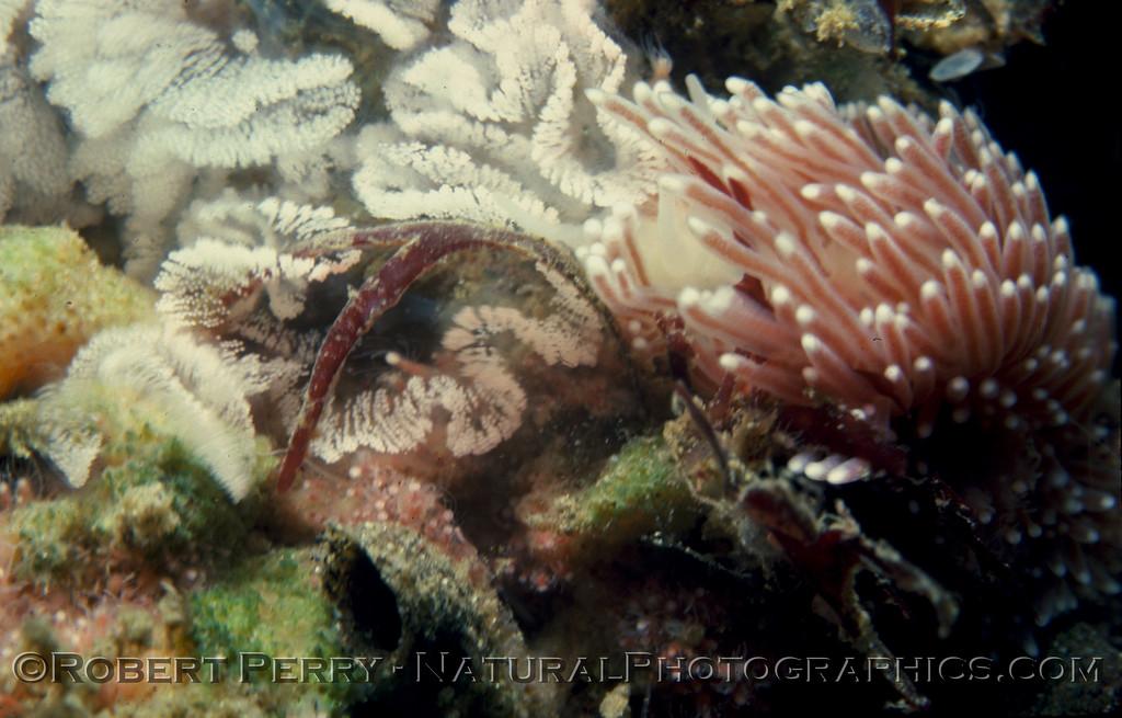 Log 700 - Anacapa Island