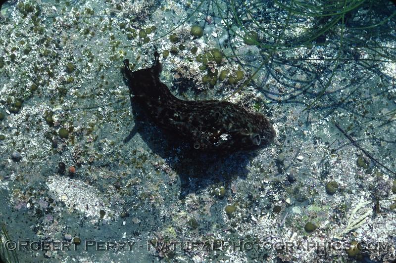 1980 - San Nicolas Island tidepools