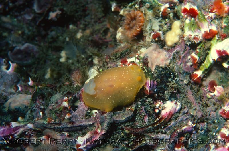 Log 1234 - Anacapa Island