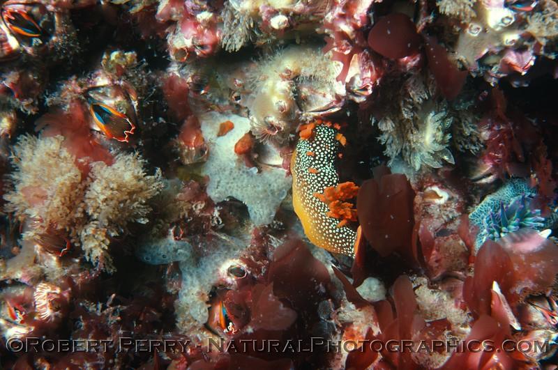 Log 867 - Wilson's Rock, San Miguel Island