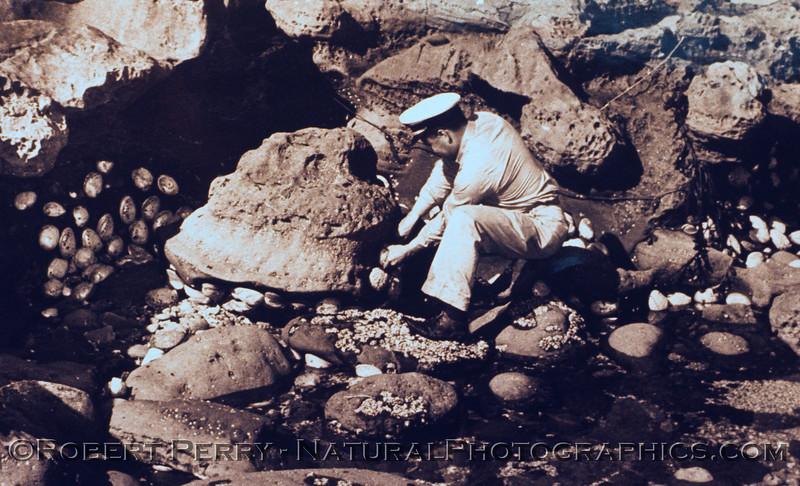 Haliotis cracherodii masses San Nicolas Island archive photo