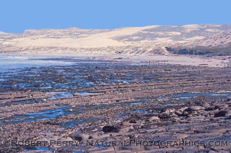 Haliotis cracherodii masses San Nicolas Island 1980-03-002