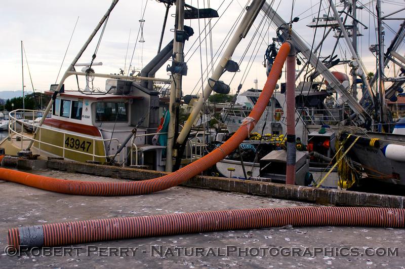 vessels Loligo squid offload 2011 11-11 Ventura Hbr a - 028