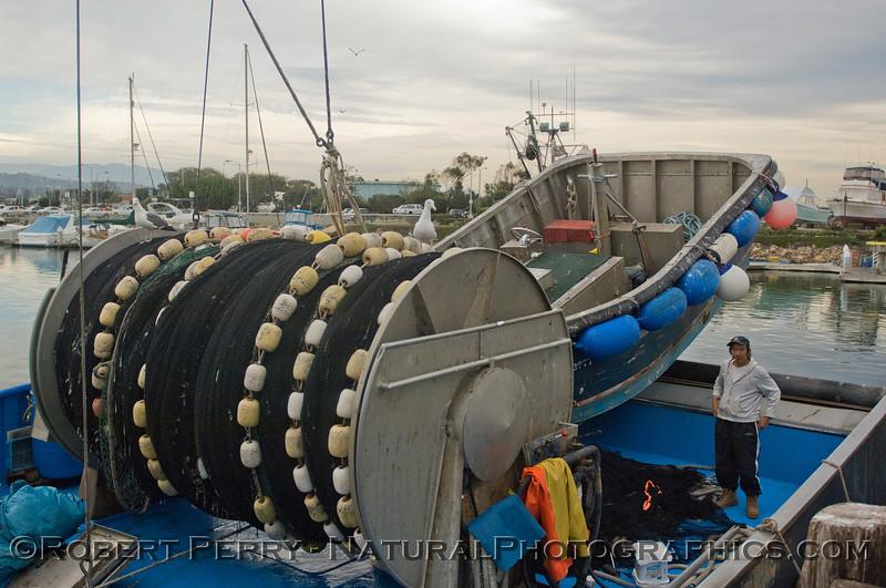 vessels Loligo squid offload 2011 11-11 Ventura Hbr a - 031
