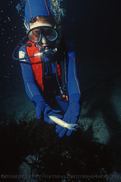Loligo opalescens & diver Log 1088 1985-01 Anacapa