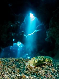 Grotto Elysia.