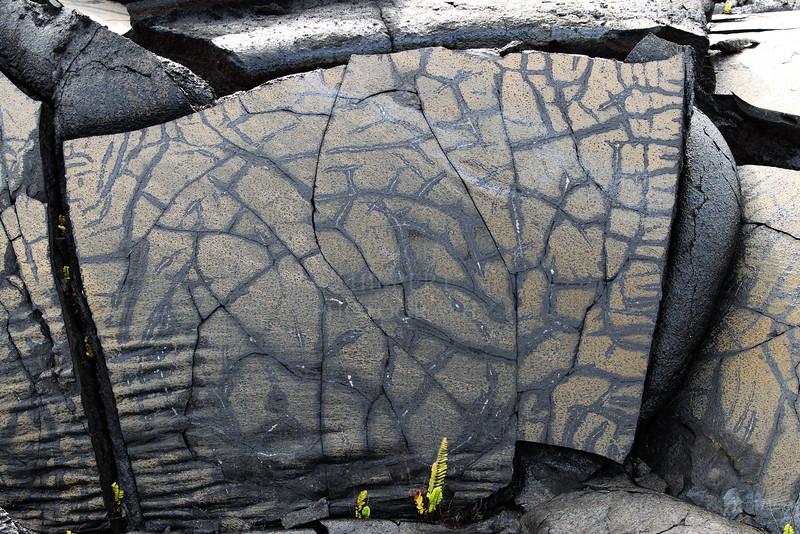 Pele-Petroglyphs_ Peleglyphs!<br /> <br /> IMG#_0592