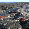 Pahoehoe breakout near ocean May15-10<br /> IMG#2691
