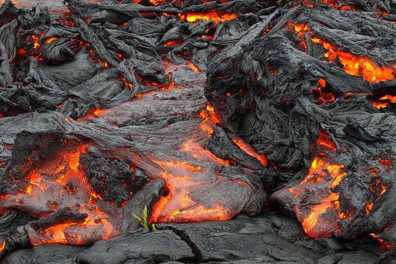 Last Fern Standing- April 14, 2010 -Kalapana pali surface flow