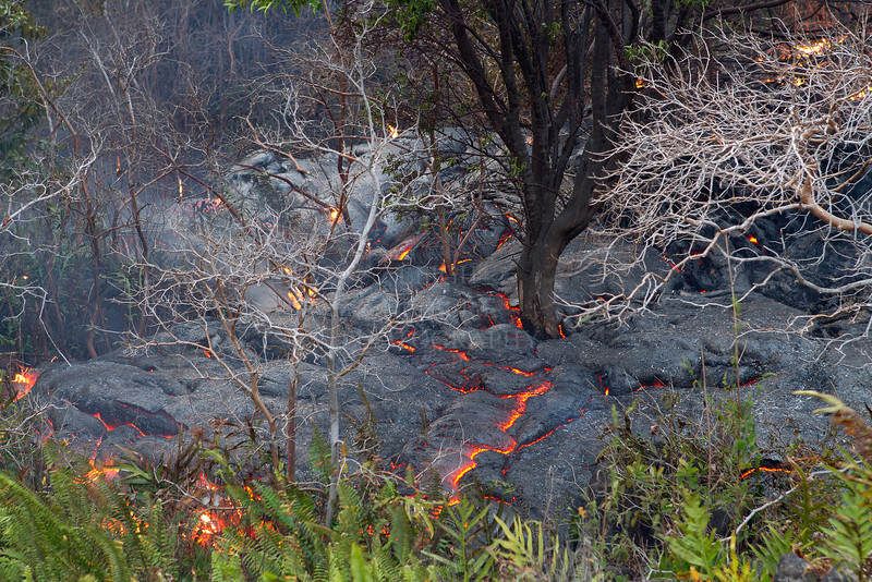 Lava moves through the forest only 500-feet from an occupied home in Royal Gardens subdivision, March 1st, 2012<br /> <br /> IMAGE# _LRH_0624