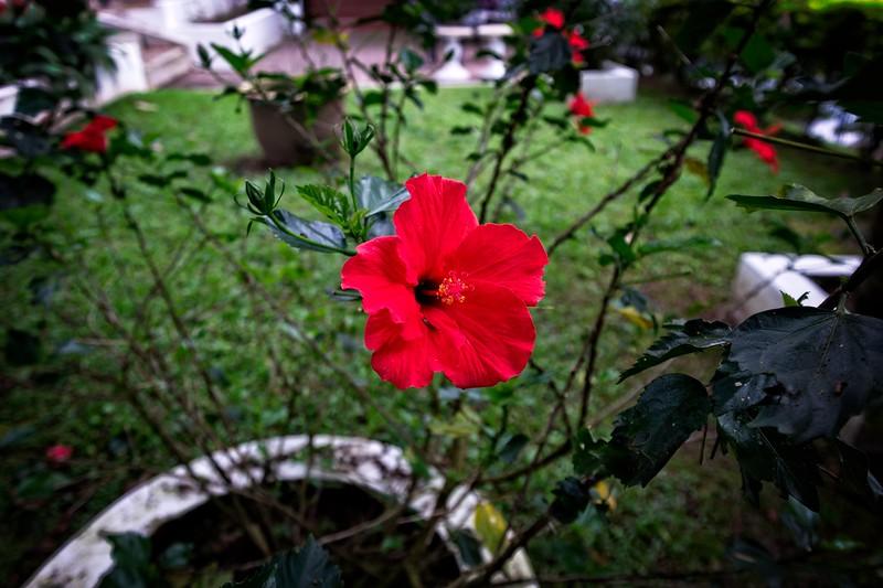 Casa De La Rosa Gardens