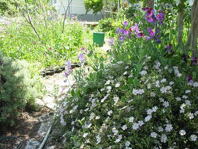 Grandma Lucille's Garden - 20