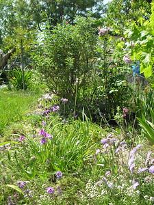 Grandma Lucille's Garden - 07