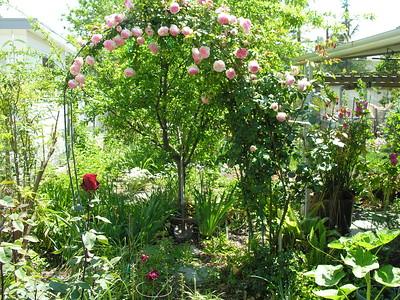 Grandma Lucille's Garden - 08