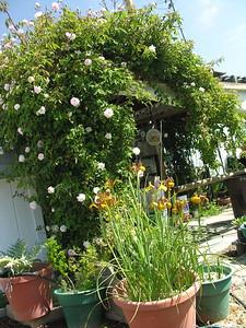 Grandma Lucille's Garden - 14
