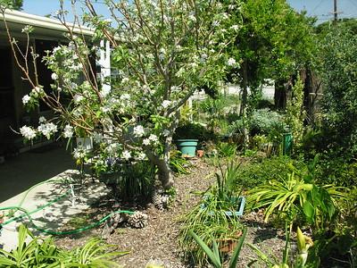 Grandma Lucille's Garden - 01