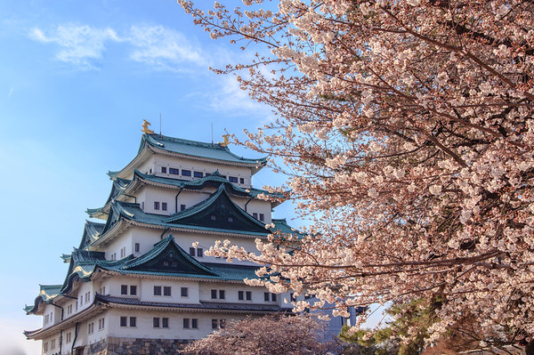 PM 3:40 名古屋城 Nagoya Castle Japan  https://plus.google.com/u/0/photos/photo/110974670469184990448/6408052601030662994?authkey=CMrv5N-93qjengE  - Canon EOS 5DsR - Sigma 24-105mm f/4.0 DG OS HSM ART Photography and Copyright by Sylvia Ting  #japan #nagoyacastle #名古屋城 #sakura #cherryblossom #sylviating #sylvia_photo #sylviatingphotography