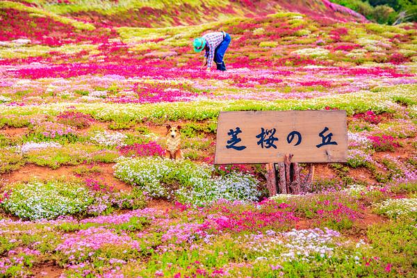 Mishima Garden, Kutchan, Hokkaido, Japan