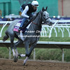 Breeders Cup Contenders work out at Del Mar