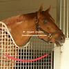 Horse of the Year  Gun Runner before going off to Kentucky