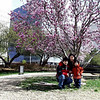 "Then one day in 2003, when we were in Tulsa, Oklahoma, we saw this beautiful tree and thought it would be nice to have a family picture taken...  Daddy didn't have his tripod with him.  After a few shots of just Mommy and the boys, he handed Eric his camera and said,""Son, why don't you take a photo of us...""  <br /> <br /> This was what Eric produced... he just celebrated his 5th birthday that weekend.  Notice that the little boy in the picture was little Bro, Norman.  Elaine wasn't even born yet.  <br /> <br /> Daddy knew right away his boy would share his passion for photography with him.  We knew that one day, Eric would make us proud..."