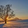 Winterbaum im Schneefeld mit Hohenstaufen