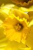 Yellow 22