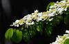 Seattle Spring Flowers