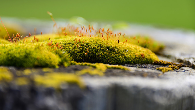 Tiny World of Moss