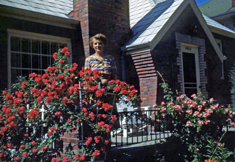 June 1950 - Jean Gdanitz and her roses