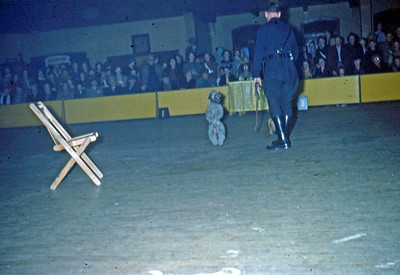 March 1951 - Dog Show at the auditorium