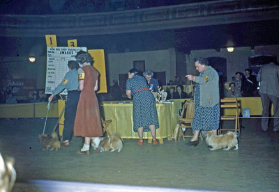 March 1951 - Elaine showing Pappy at the dog show