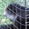 Hagan kids at zoo 1988 part 2