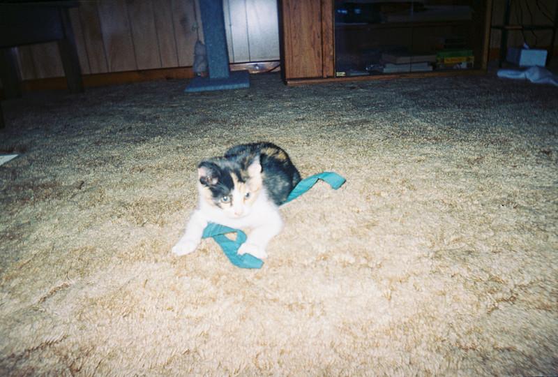 Baby Misty Dec. 2005