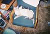 Baby Misty & Smokey, early 2005