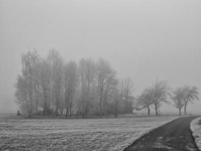 Brouillard d'hiver - Alsace 2007
