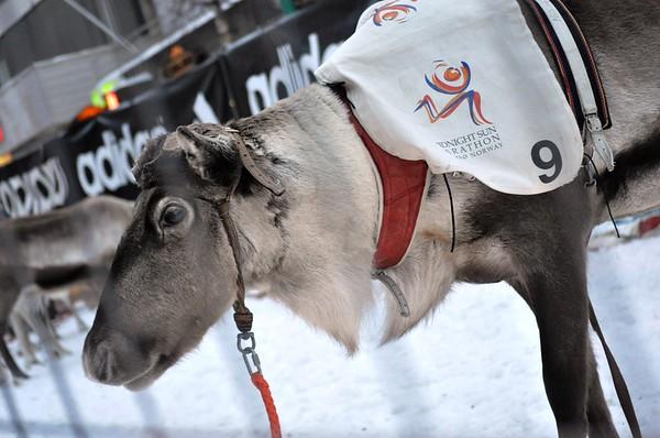 Reindeer Races in Tromso--The High North (Tromso, Norway)