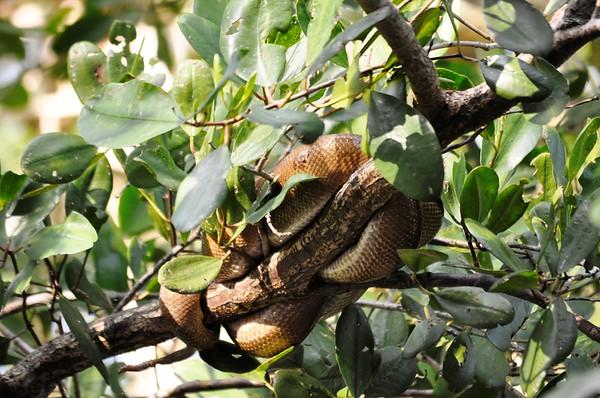 Port of Spain, Caroni Swamp, and Animal Adventures (Trinidad and Tobago)