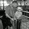 Jordan and Wyatt show bucket calves at Harvey County Fair