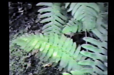 Video part 2