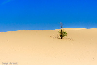 Monahans Sand Hill State Park