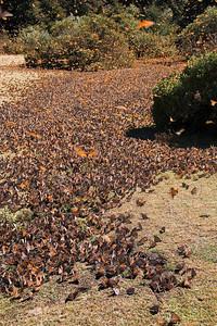 Awakening Monarch Meadow