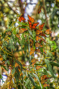 2018-butterflies-5420-closeup-