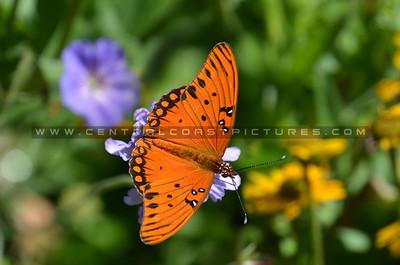 butterfly_7652