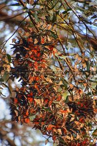 butterflies_6997