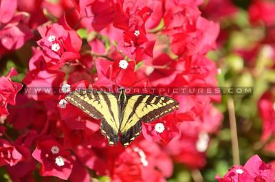 butterfly_1843