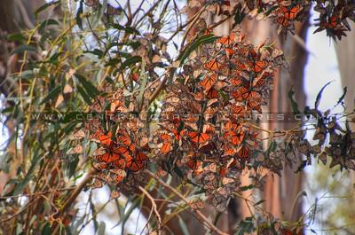 butterflies_6995