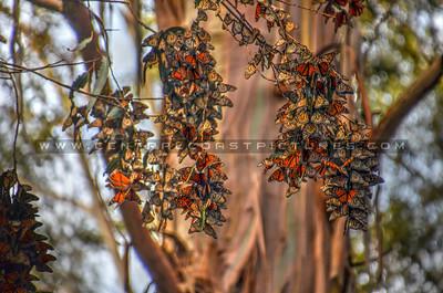 butterflies_6992